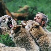 Wolfsgehege in Merzig